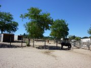 Horse Boarding Facilities Sebastopol California