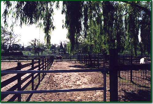 Horse Boarding Facilities with Stall Turnout