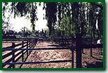 Horse Boarding Stables with Shelters
