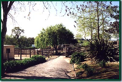 Boarding Stable Facilities North Bay Area Equine Care